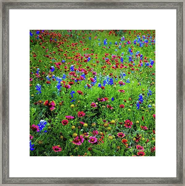 Wildflowers In Bloom Framed Print