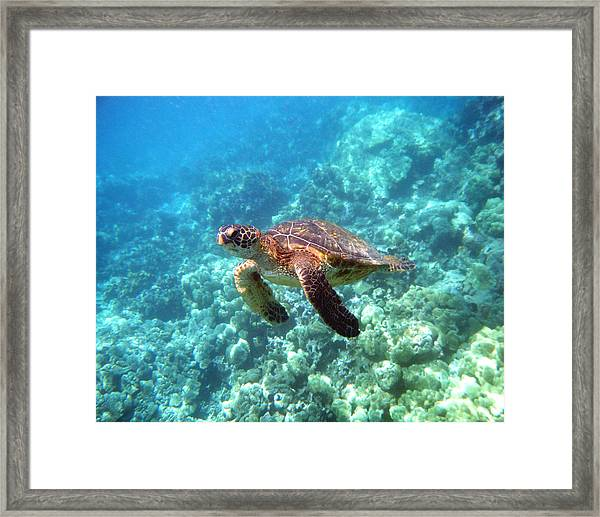 Young One Framed Print