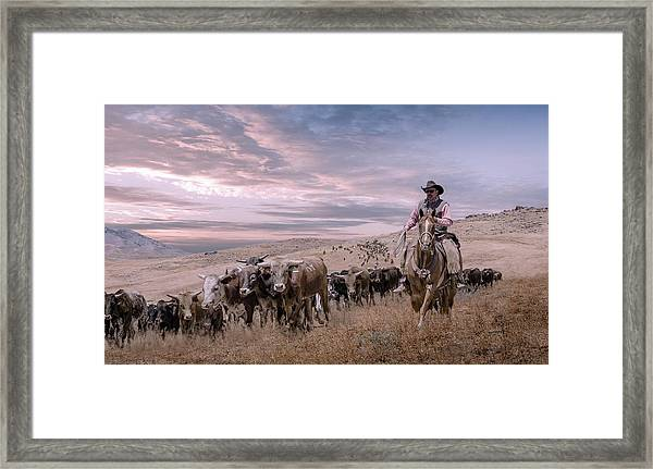 2016 Reno Cattle Drive Framed Print