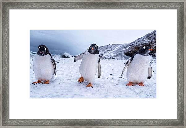 3 Amigos Framed Print
