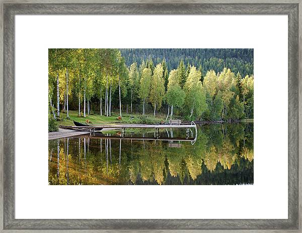 Birches And Reflection Framed Print