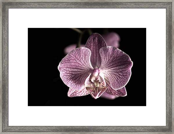 Close Up Shoot Of A Beautiful Orchid Blossom Framed Print