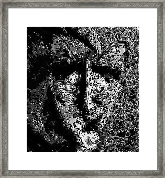 Coconut The Cat Framed Print