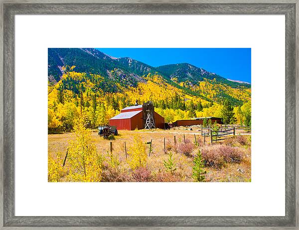 Colorado Aspen Trees Framed Print by Terry Runion