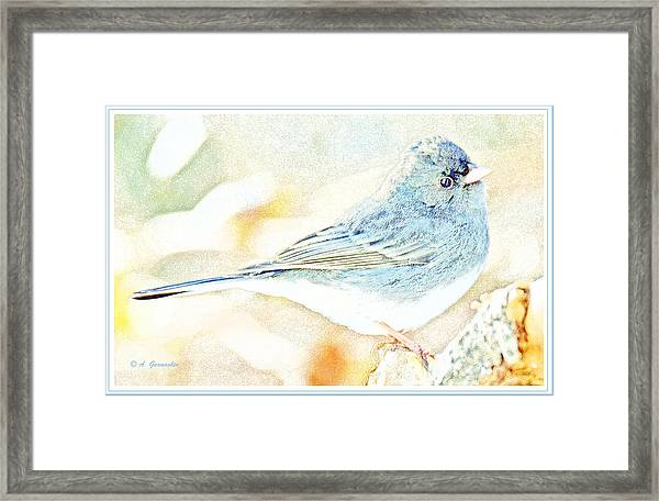 Slate-colored Junco, Snowbird, Male, Animal Portrait Framed Print