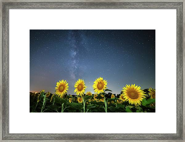 Sunflower Galaxy Iv Framed Print