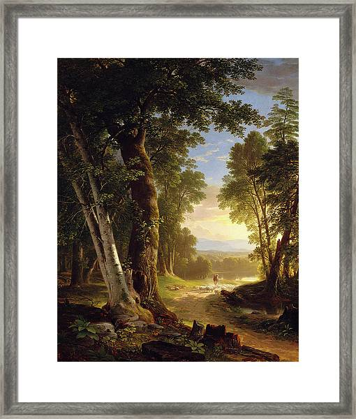 The Beeches Framed Print