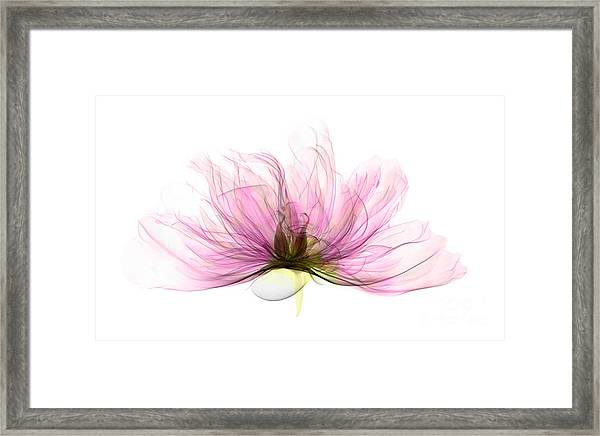 X-ray Of Peony Flower Framed Print