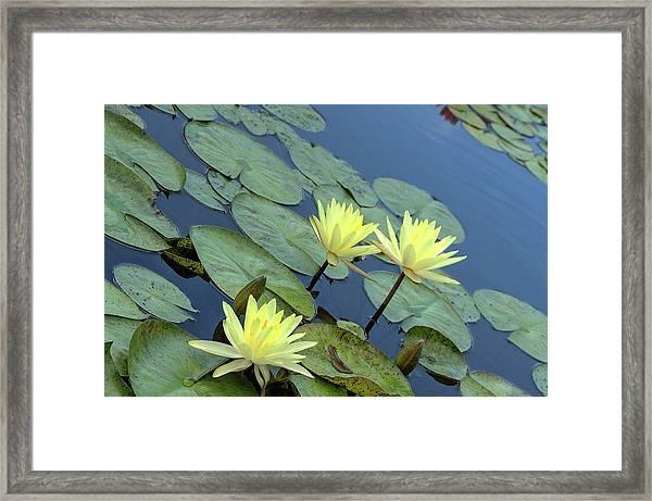 3 Yellow Framed Print