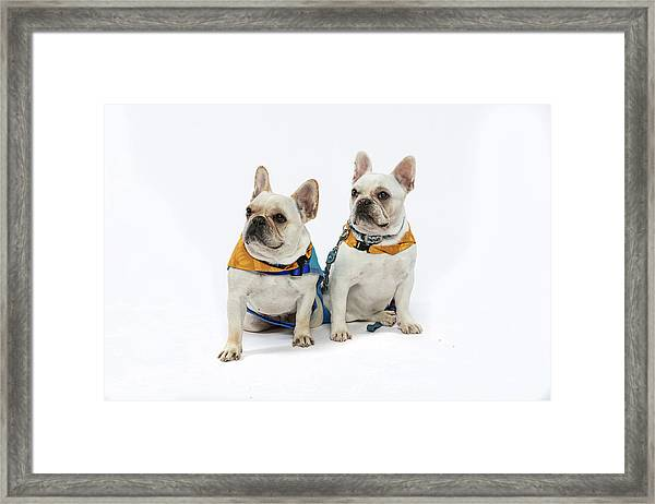 3010.062 Therapet Framed Print