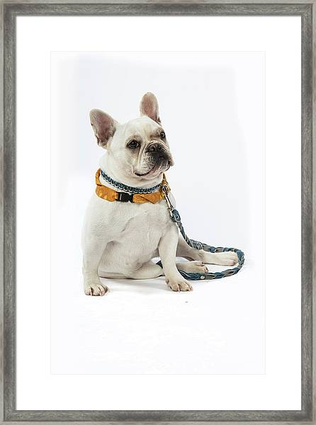 3010.068 Therapet Framed Print