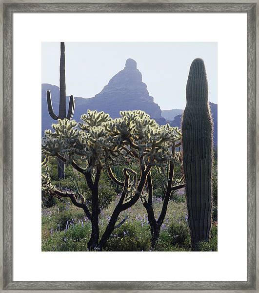313737 Montezumas Head Framed Print