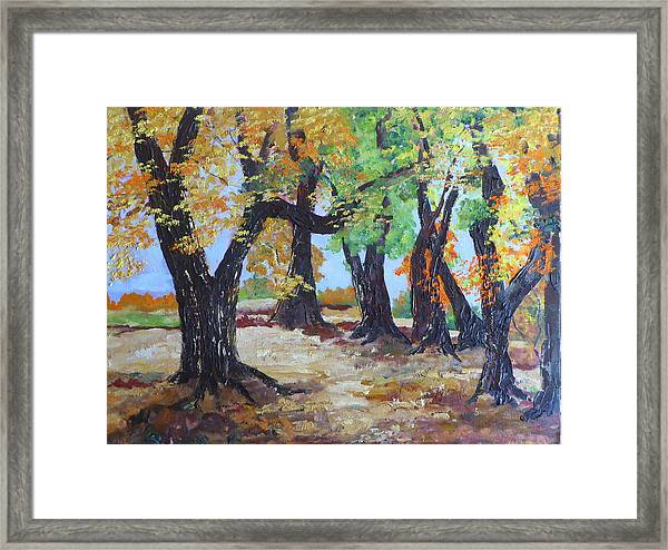 #35 Cottonwood Colors Framed Print
