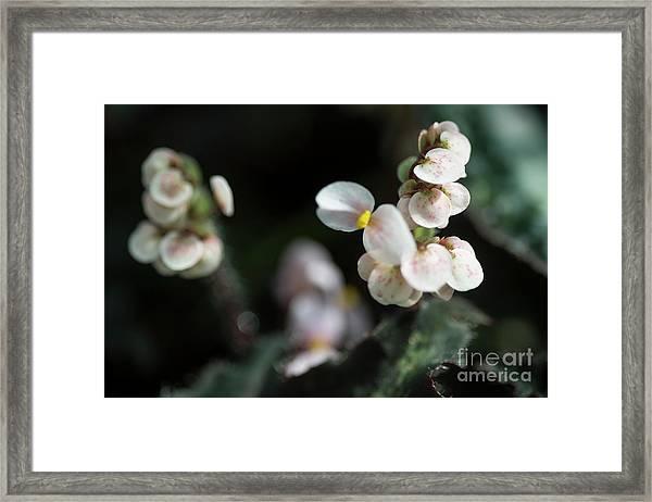 Fine Art  Framed Print
