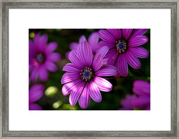 Flower Series Framed Print