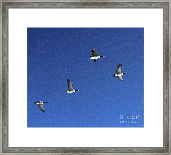 4 Geese In Flight Framed Print