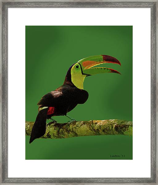 Keel-billed Toucan Framed Print
