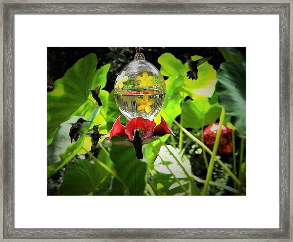 5 Hummers In A Row Framed Print