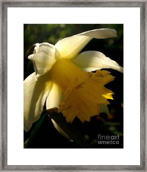 Scent Of Spring Framed Print by Valia Bradshaw