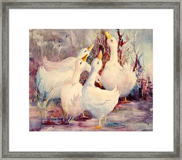 5 White Geese Framed Print