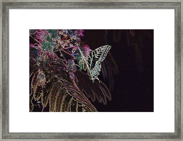 5815 2 Framed Print by Jim Simms
