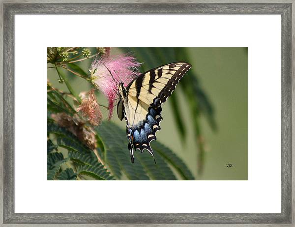 5816 1 Framed Print by Jim Simms