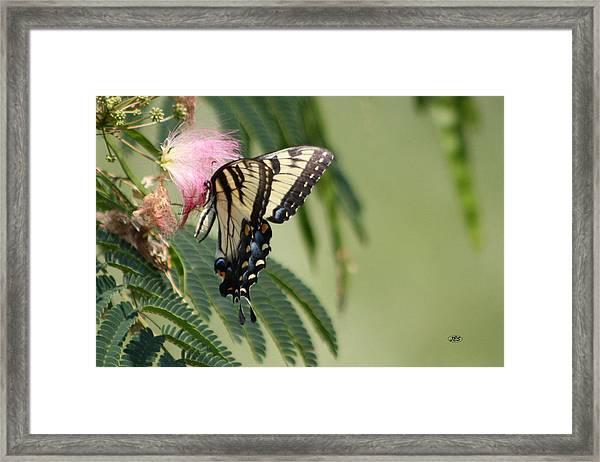 5819 1 Framed Print by Jim Simms