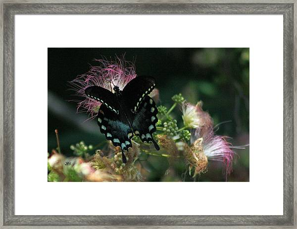5848 1 Framed Print by Jim Simms