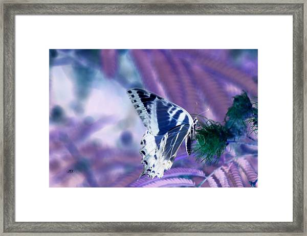 5859 2 Framed Print by Jim Simms