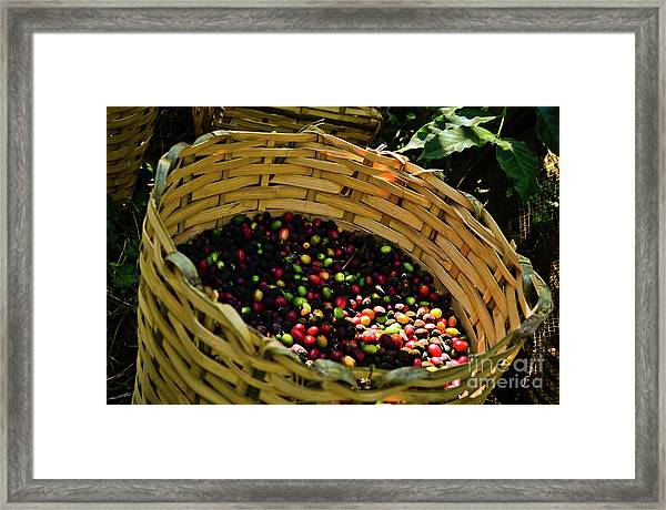 Coffee Culture In Sao Paulo - Brazil Framed Print