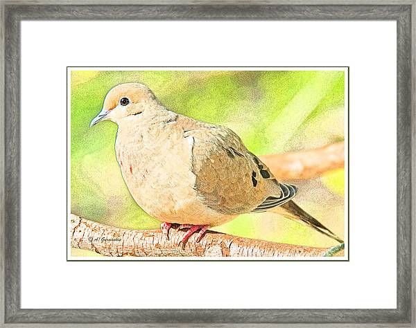 Mourning Dove Animal Portrait Framed Print