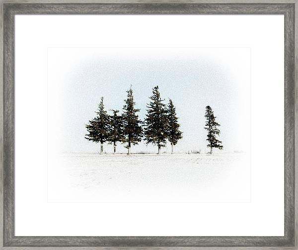 6 Trees Framed Print