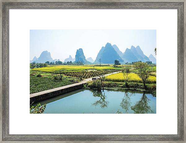 Rice Fields Scenery In Autumn Framed Print