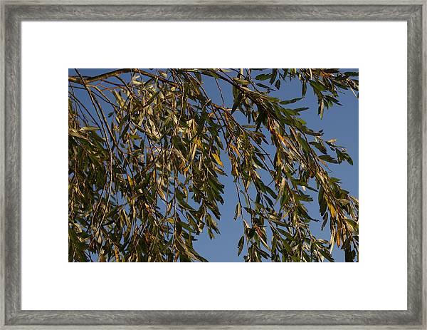 Ballyronan Marina Dawn Framed Print
