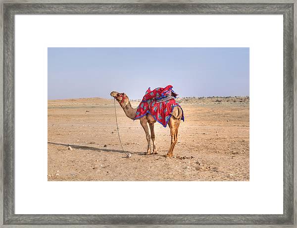 Thar Desert - India Framed Print