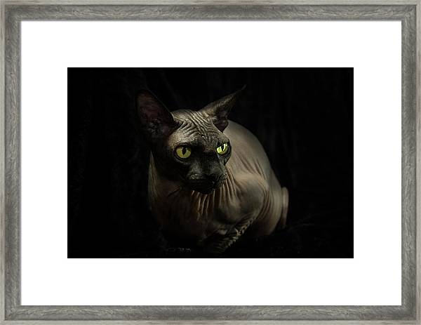 Sphynx Cat Portrait Framed Print