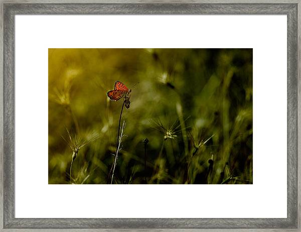 Untitled Framed Print by Antonio Grambone
