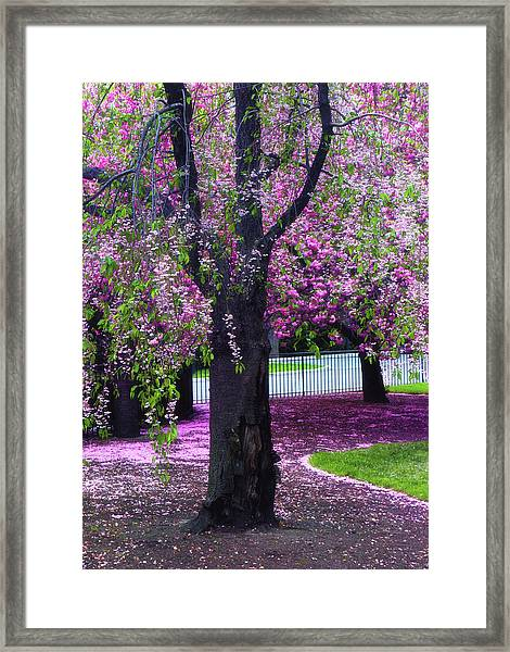 Sublime Spring Framed Print