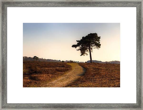New Forest - England Framed Print