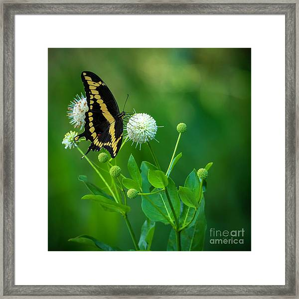 A Beautiful Day Framed Print