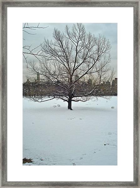 A Beautiful Tree Framed Print