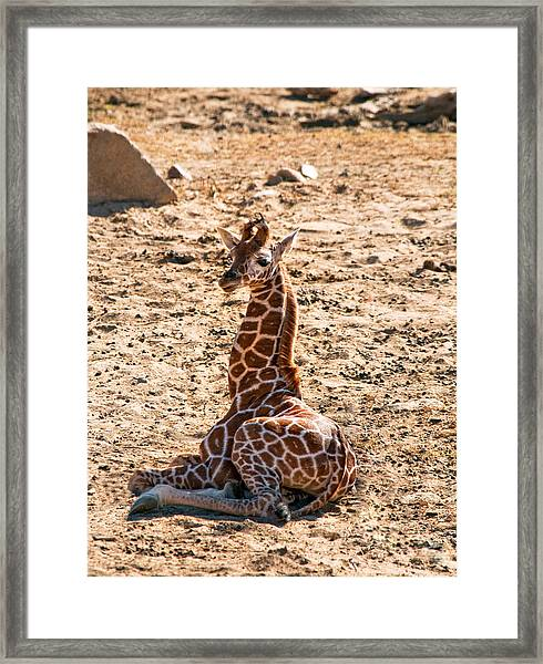 A Big Baby Framed Print by Melody Watson
