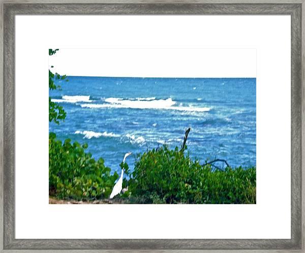 A Bird And The Sea Framed Print