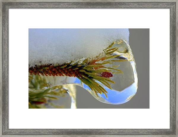 A Bit Icy Out There Framed Print