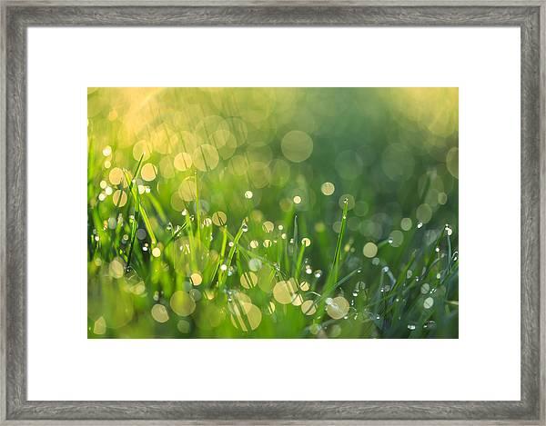 A Bit Of Green Framed Print