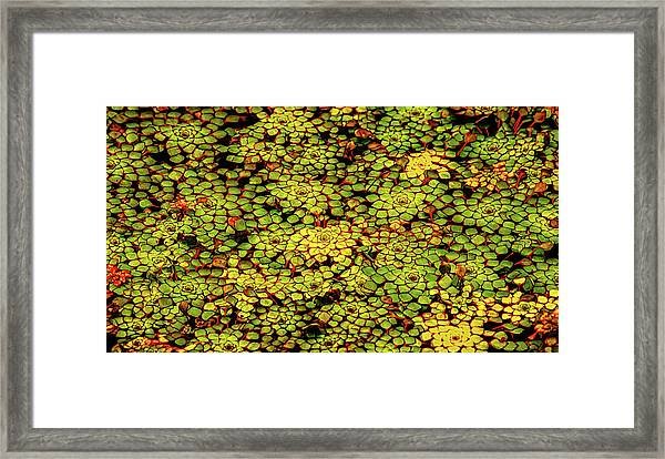 A Botanical Mosaic Framed Print