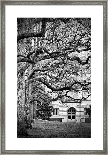 A Branch Salute Framed Print