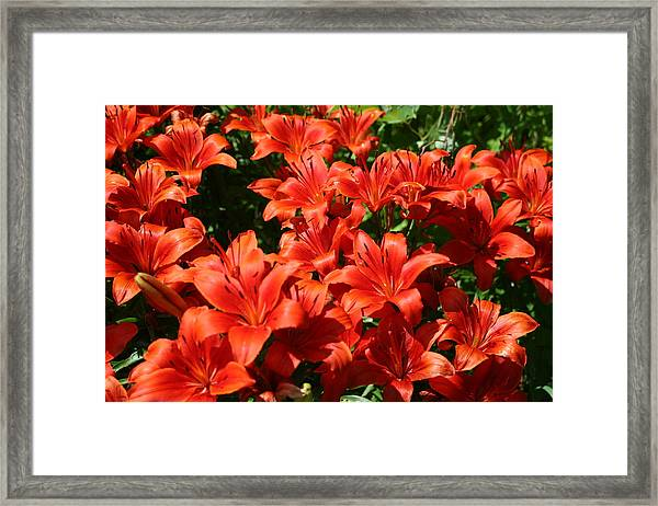 A Burst Of Colour Framed Print