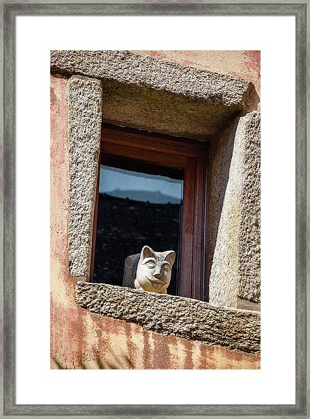 A Cat On Hot Bricks Framed Print