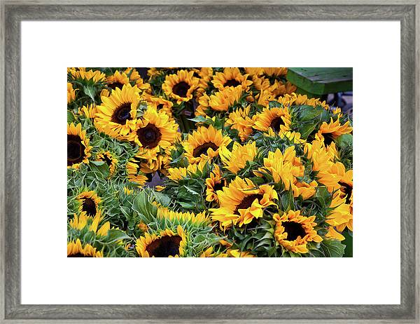 Framed Print featuring the photograph A Crowd Of Sunflowers by Susan Cole Kelly